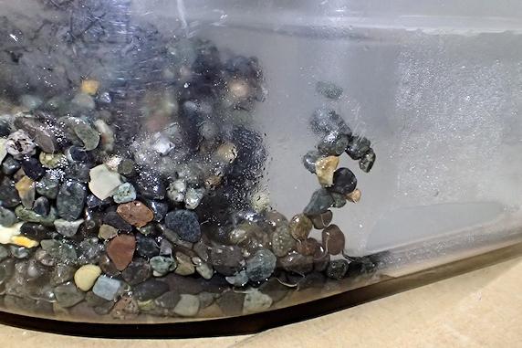 カタツムリの穴掘り行動確認
