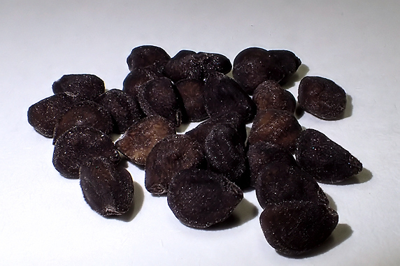 マルバアサガオの種を採取