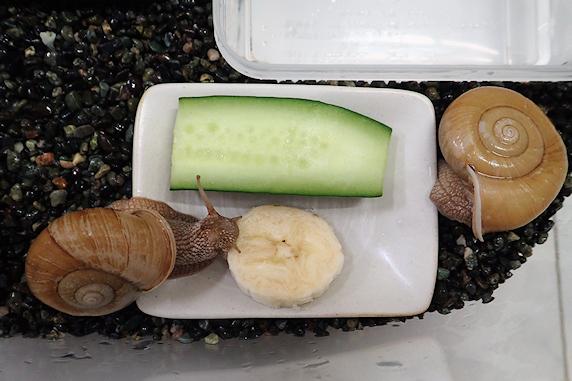 バナナ大好きご老体