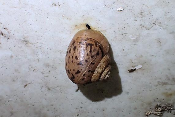 ムスカリの球根掘り上げ準備で出くわした生き物