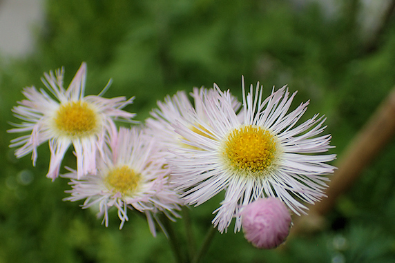 野原風花壇に咲く花