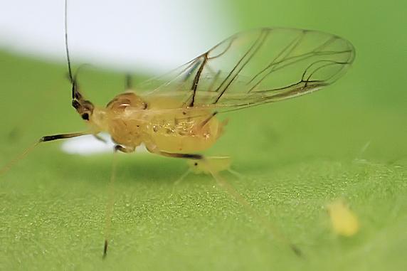 ベランダ菜園にも害虫の季節