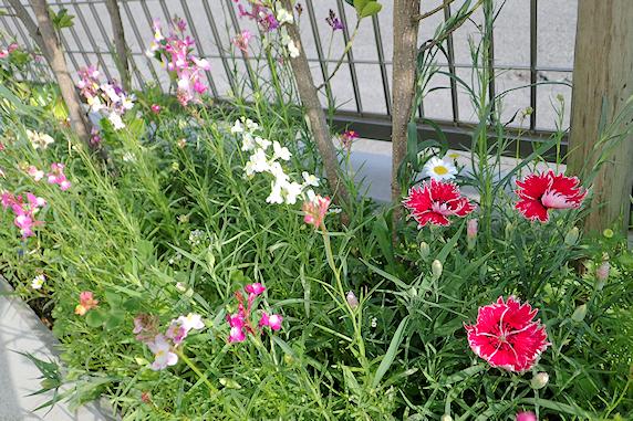 花が増える野原風花壇