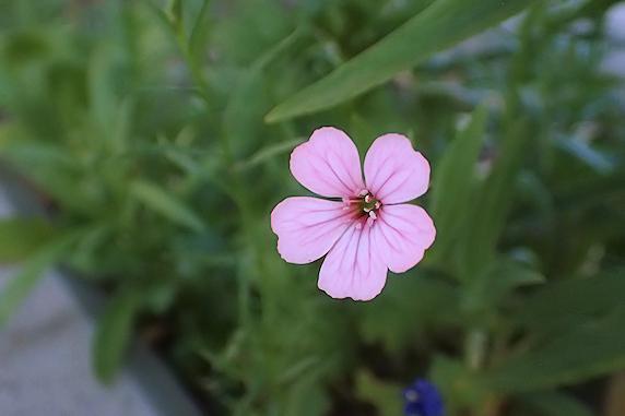 野原風花壇に新しく咲いた花