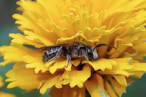 ハチのひと休み
