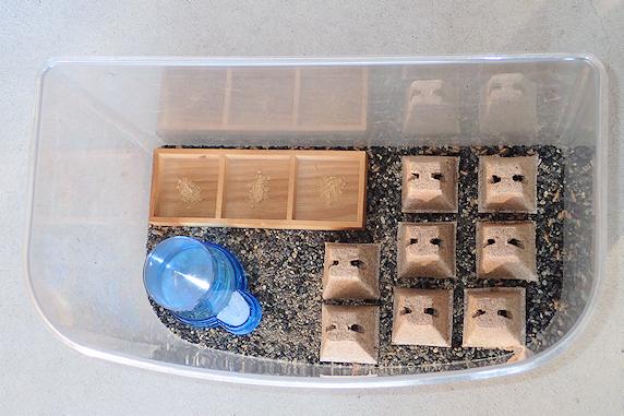 ヨーロッパイエコオロギ飼育開始