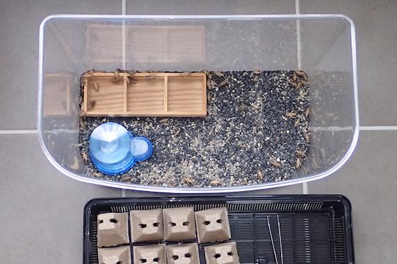 コオロギの個体数を確認