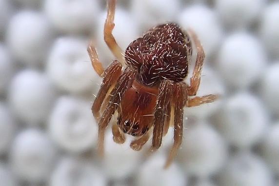 壁にクモの赤ちゃん