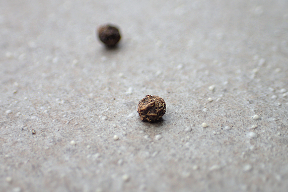出た!ウスムラサキイラガの幼虫