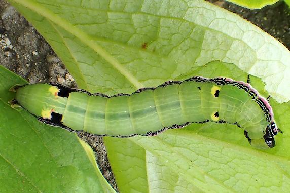 謎の幼虫を保護