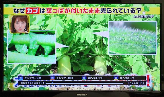 葉っぱの画像がテレビ番組に使用されました