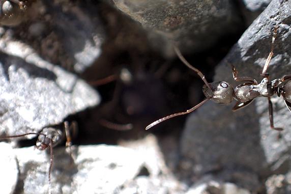 アリも巣作り開始