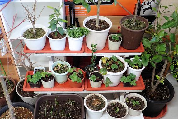 車庫の中の植物