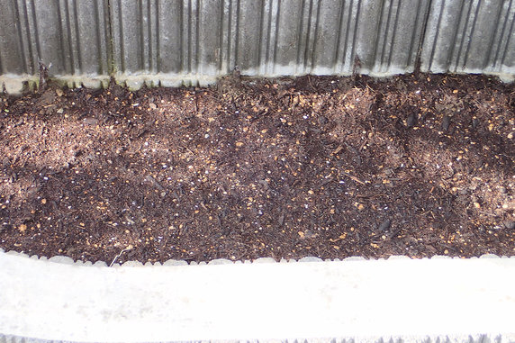 ブルーフラワー花壇で発芽確認