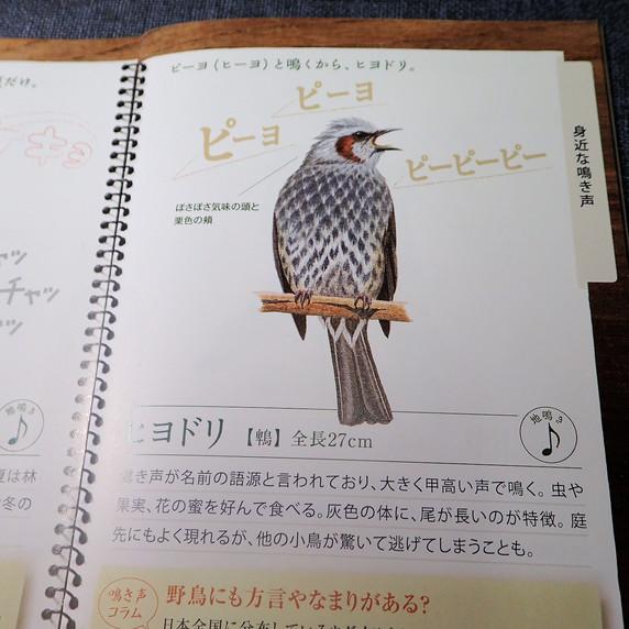 日本野鳥の会の鳴き声ノート