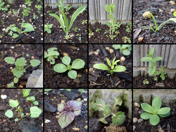 十人十色のブルーフラワー花壇