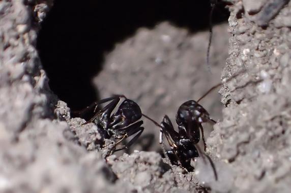 庭のアリとの交流