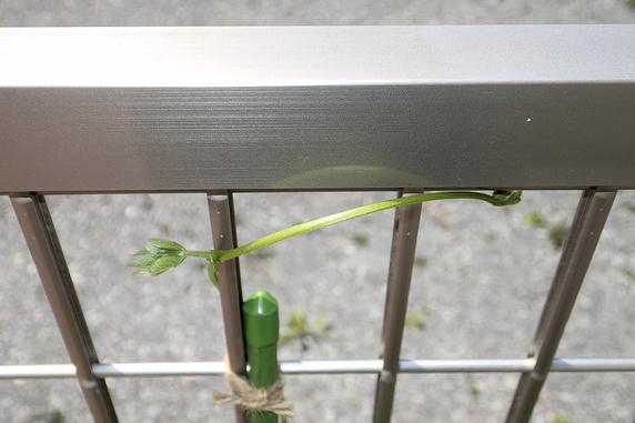 からむ巻きつく二つの野菜