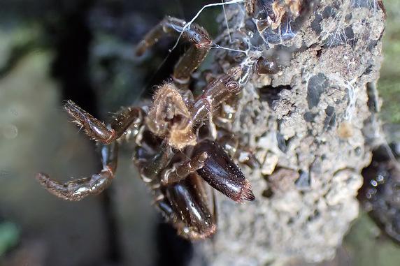 ジグモの「俺様の巣」