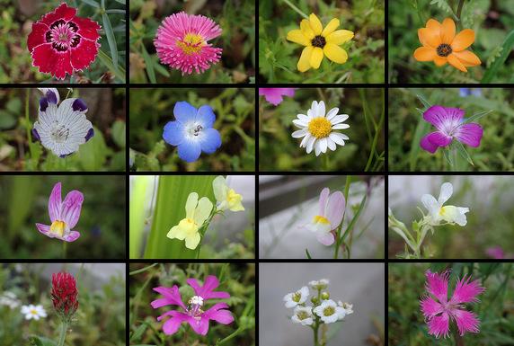 野原風花壇で開花中の花