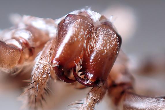 ジグモの抜け殻