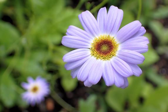 ブルーフラワー花壇で開花中の花