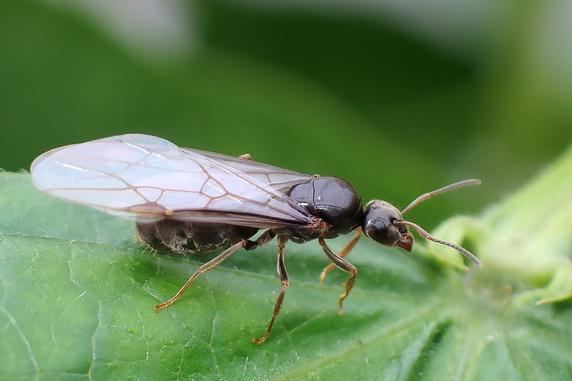 アリの結婚飛行が盛ん