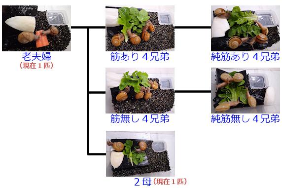 カタツムリの家系図の復習