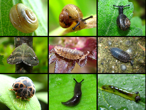 庭の小さな生き物たち